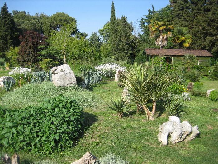 Tree Sculpture Rock - Object Grass Sky Plant