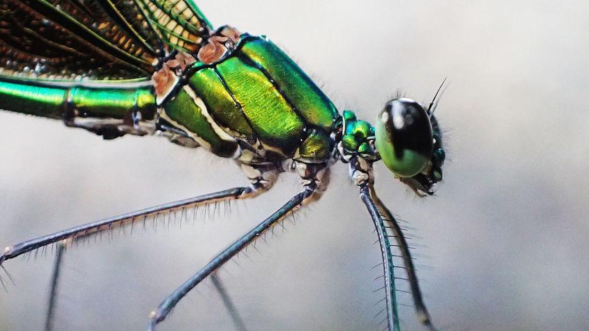 Green Lantern Close-up Dragonfly Eye Green Color Green Lantern  Macro Macro Photography Nature