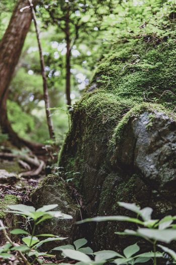 Plant Tree Growth Green Color Nature No People Day Plant Part Trunk Selective Focus Forest Covering Sunlight Focus On Foreground Outdoors Beauty In Nature Tranquility Close-up Moss Land