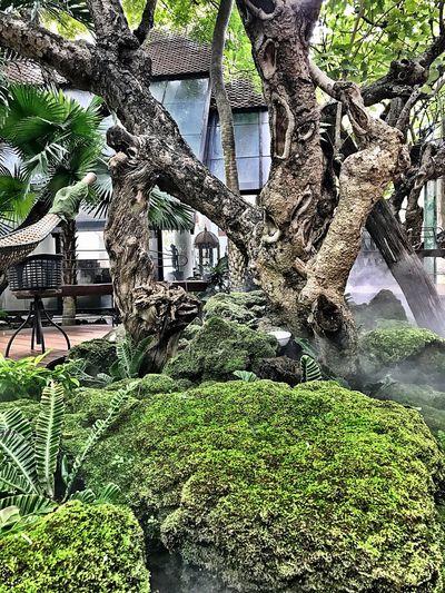 ธรรมะสวัสดี🙏🏻 Tree Nature