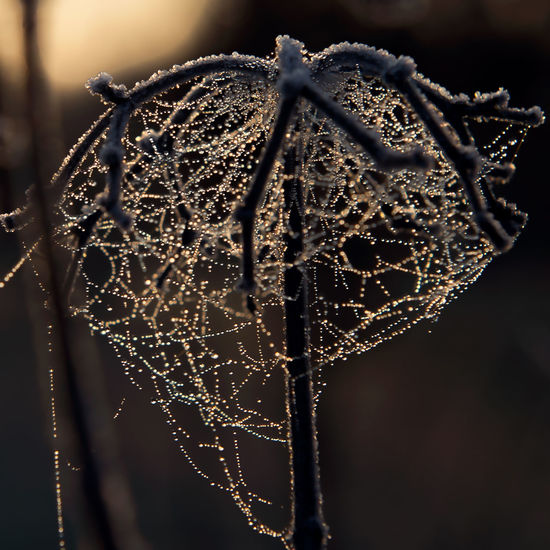 Beauty In Nature Close-up Day Focus On Foreground Fragility Freshness Nature No People Outdoors Spider Web Trapped Water Web Shades Of Winter