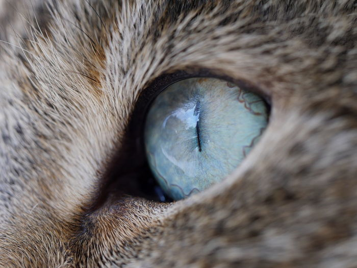 Close-Up Of The Eye Of A Cat