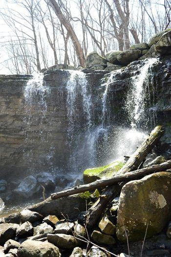 Tree Water Rock