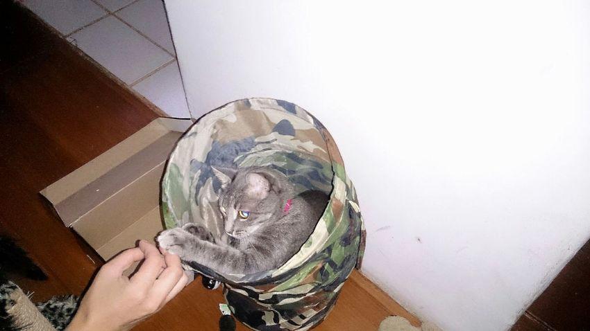 Cute Pets My Cat!