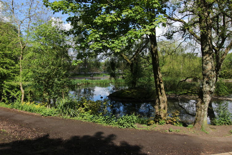 Tree Water Sky Countryside Willow Tree Grassland Green Young Plant Woods Lake Lakeside Tree Trunk Calm Tranquil Scene