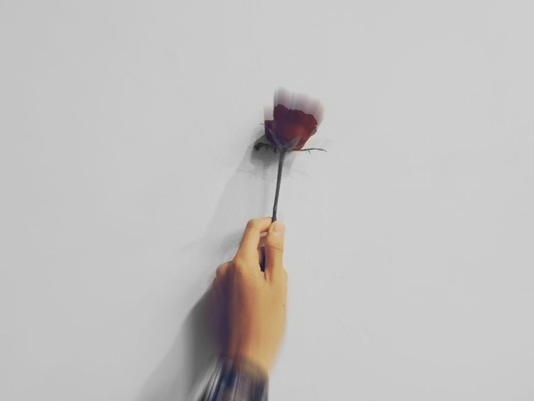 Rosé Roses Flower Hand Inframe Swatch Like4like Newbie Nature Natgeo Discovery Jakarta Cheap Goods First Eyeem Photo