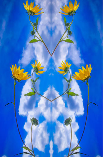 I'm back. Blue Cloud - Sky Day Digital Composite Flowering Plant Fragility Low Angle View No People Sky Yellow