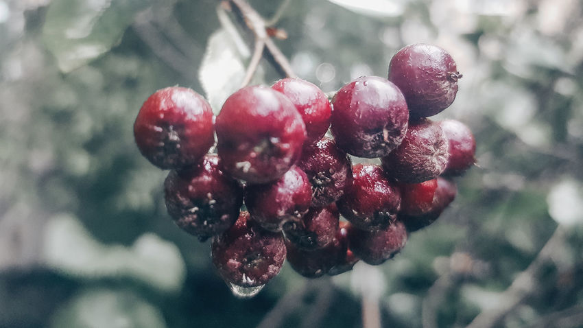 Rain Beauty In Nature EyeEmNewHere Nature EyeEm Selects Tree Fruit Red Close-up Food And Drink