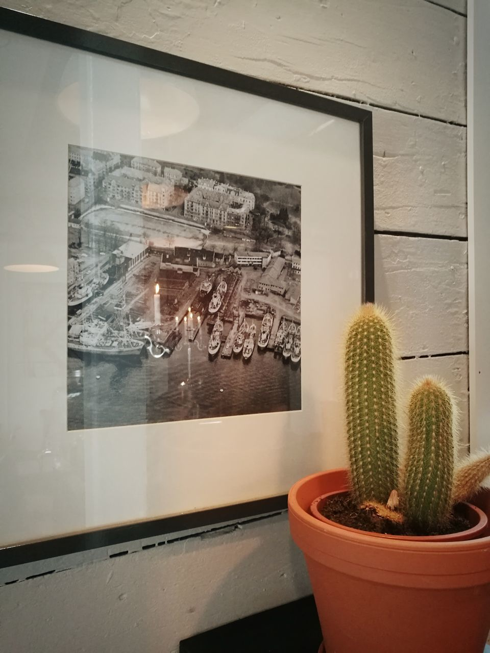cactus, growth, window, potted plant, indoors, plant, no people, day, nature, close-up
