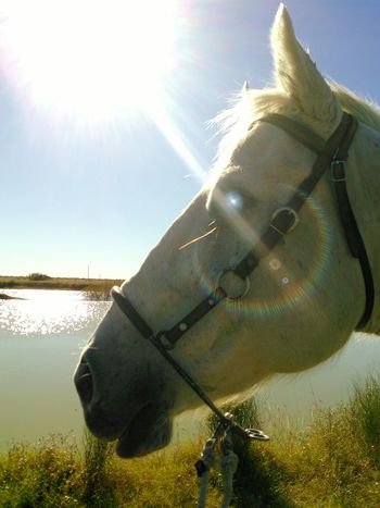 Showcase: December Mr. Heavenly Quarter Horse Sparkle In Eye Sun And Rays Animal Photography Animal_collection My Best Photo 2015