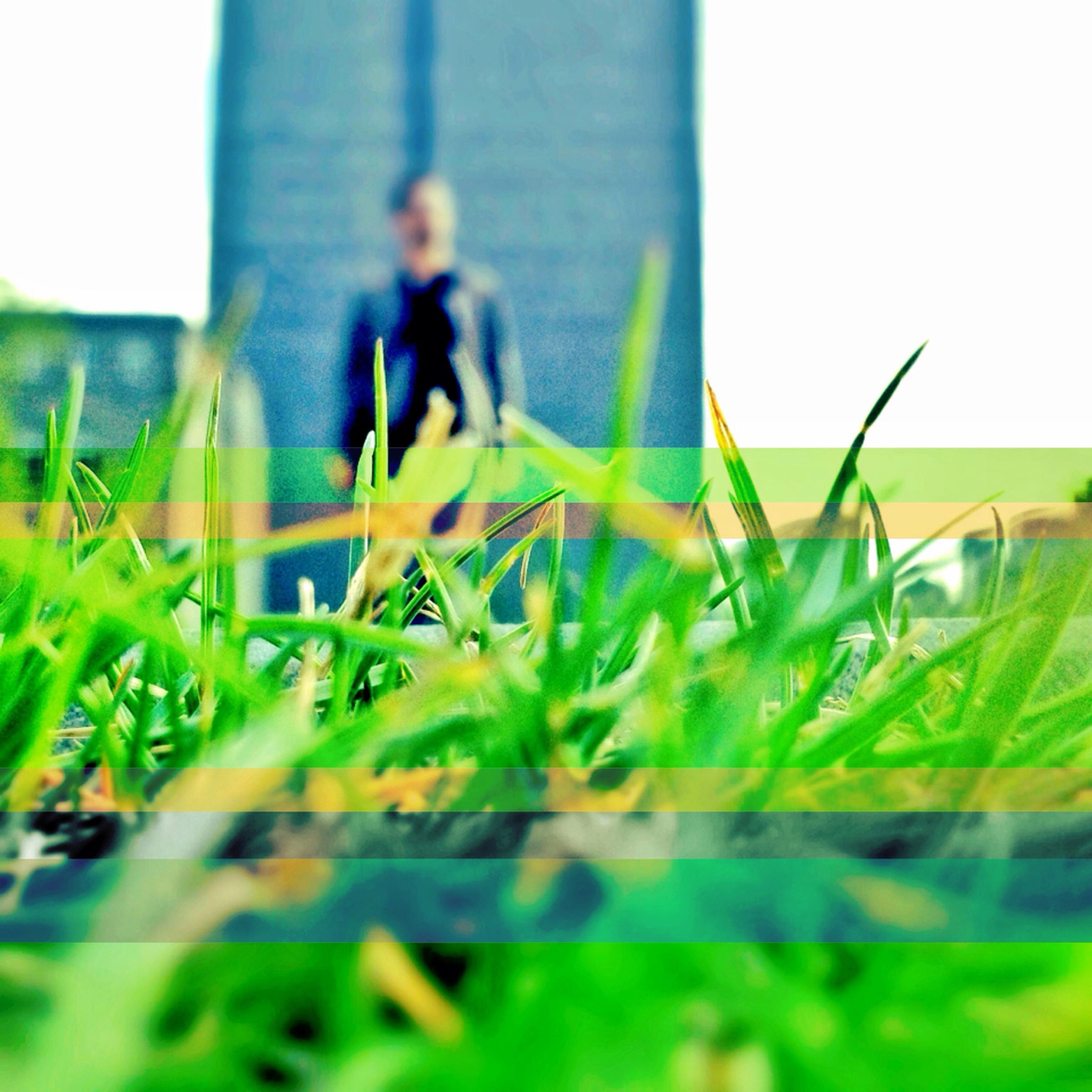 grass, green color, selective focus, focus on foreground, plant, growth, field, surface level, focus on background, nature, close-up, day, clear sky, green, outdoors, building exterior, grassy, incidental people, built structure