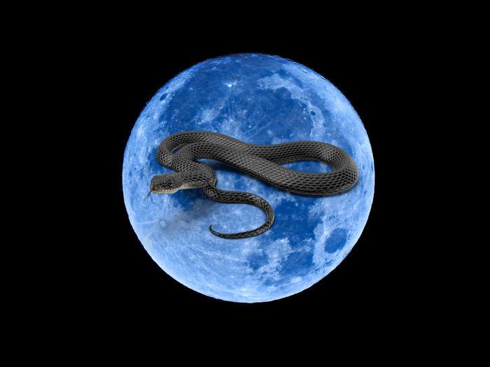 Moon Animal Animal Themes Black Background Blue Close-up Geometric Shape Indoors  Luna Nature Night No People Planet - Space Shape Single Object Sky Space Studio Shot Technology Water