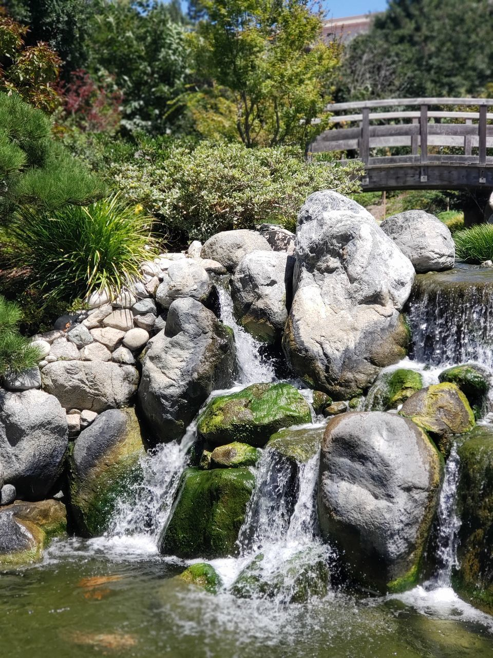 VIEW OF WATERFALL ALONG ROCKS AND PLANTS