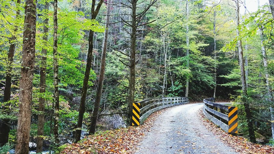 Crossing a scenic one lane bridge enroute to a hiking trail in Tremont, Great Smoky Mountains National Park. Smokies Hiking Hiking Adventures Travel Path Gravel Road One Lane Bridge Deep Woods Path Nature Forest Woods Trail