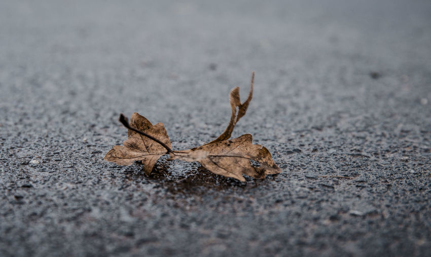 Close-up of dry leaf on road