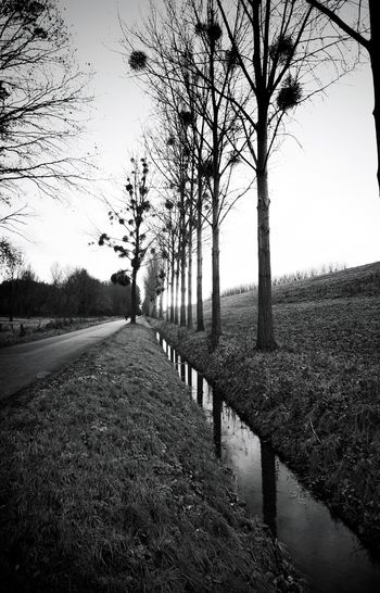 Lined-up Blackandwhite Black And White Monochrome Black & White Nature Pattern Reflection Water Reflections Black&white Blackandwhite Photography Trees