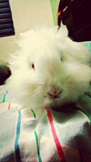 Pequena linda. Coelha Minha Ratinha Littlebaby