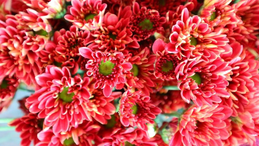 flower Flower Head Flower Red Full Frame Petal Close-up Plant Rhododendron Coral Colored Flower Market Chrysanthemum In Bloom Dahlia Single Rose Flower Shop Stamen Blooming Bunch Of Flowers Pistil Gerbera Daisy Marigold Peony