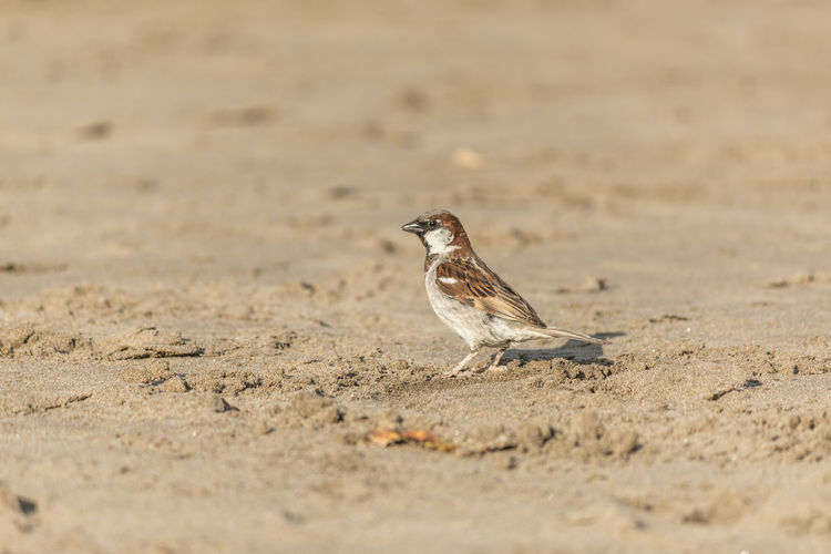 Bird perching on a sand
