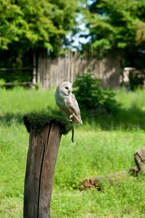 Bird One Animal Animal Themes Animals In The Wild Outdoors Green Color Nature No People Animal Wildlife Beauty In Nature Parco Gufo Natura Nature Verde
