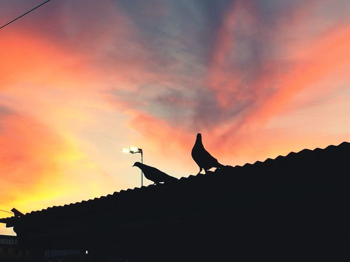 Silueta Donwtown Atardeceres Silhouette Animal Themes Sunset No People Animals In The Wild Bird Sky Nature City First Eyeem Photo