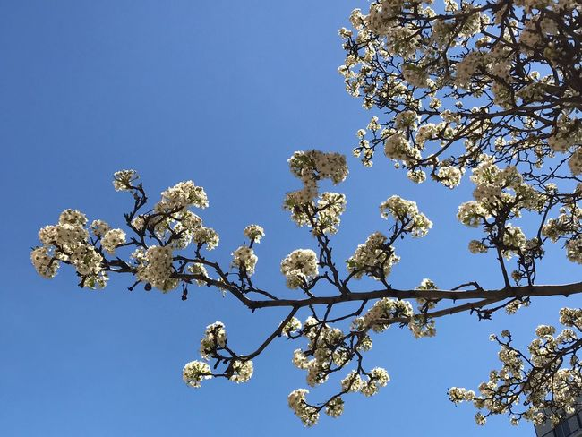 Hello, Blossom Flower Blossom Springtime In Bloom Beauty In Nature Clear Sky New York City