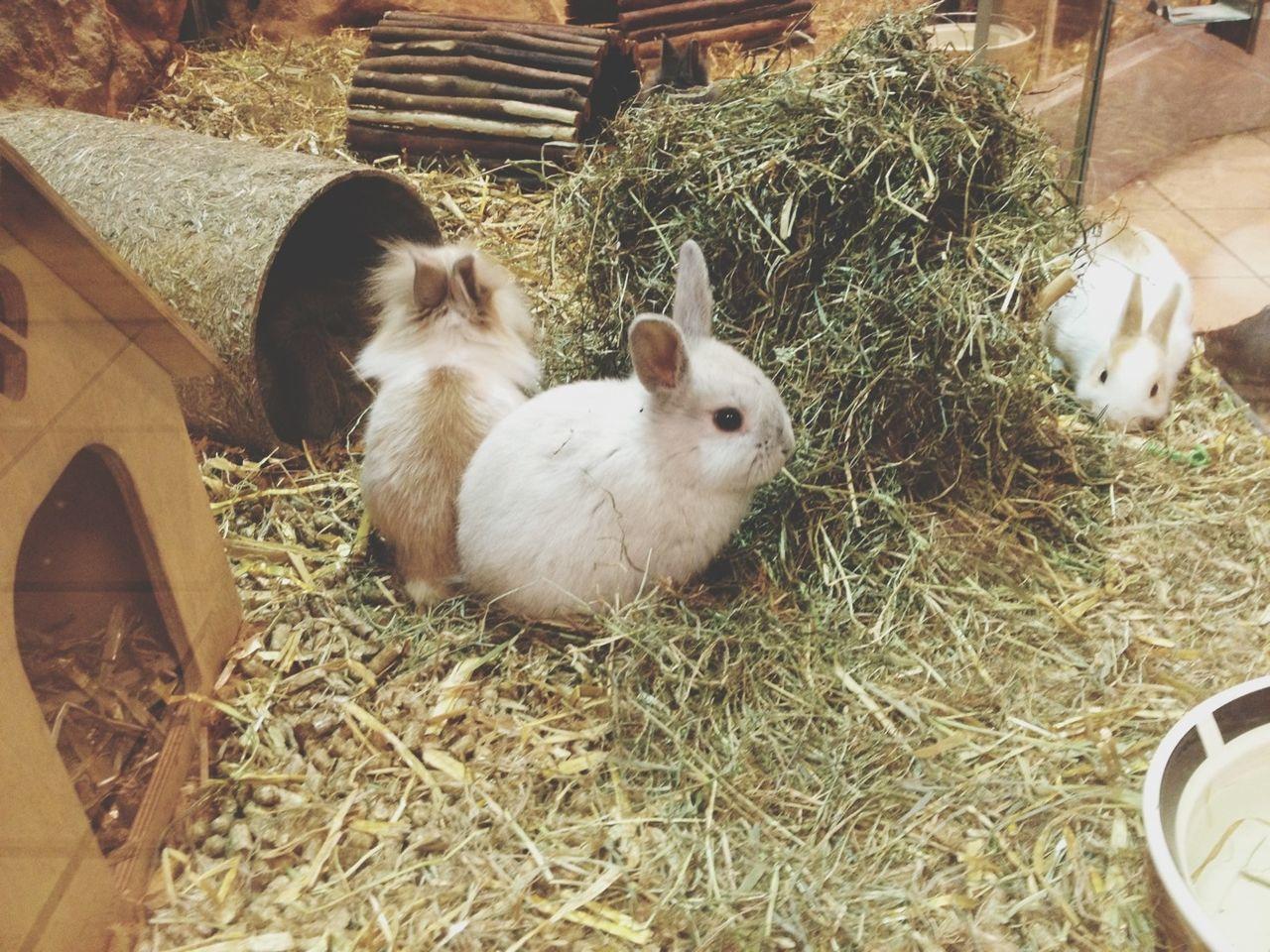 Close-up of three rabbits
