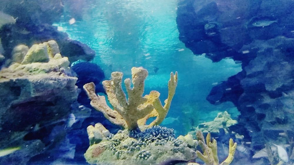 UnderSea Underwater Sea Sea Life Coral Nature Animal Wildlife Blue Animals In The Wild Multi Colored No People Water Scuba Diving Fish Aquarium Photography Nature UnderSea Freshness Beauty In Nature Kualalumpur Malaysia Out Of The Box EyeEmNewHere BYOPaper! Outdoors Day