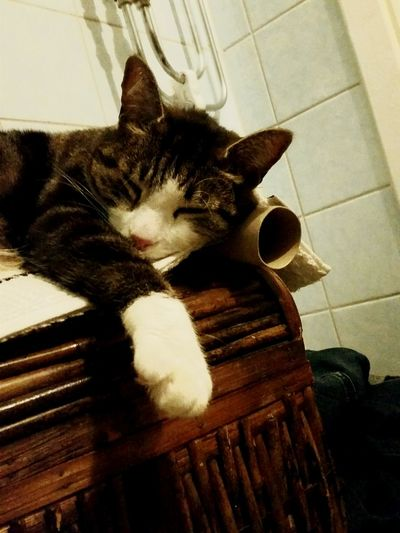 Tobbe is sleeping on a role of Toiletpaper Cat Awesomeness Sleeping Mobilephoto On The Toilet Good Night