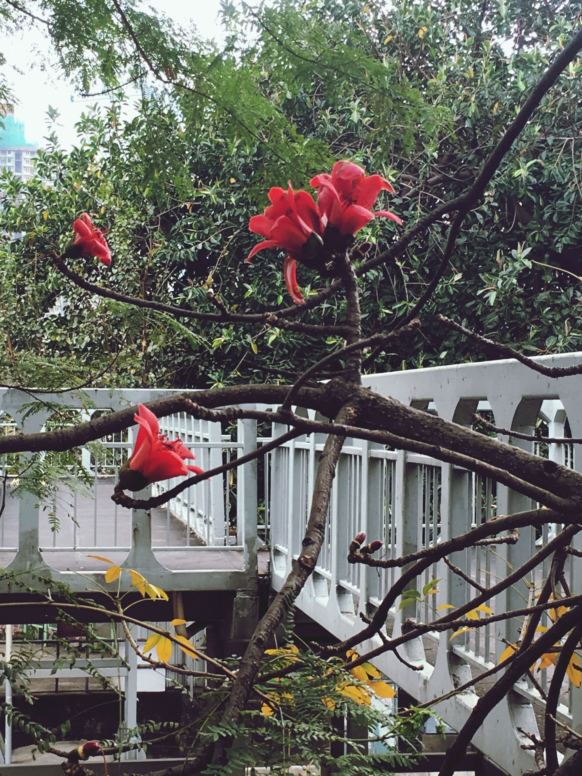 flower, fragility, growth, tree, freshness, red, petal, nature, pink color, built structure, day, blooming, plant, beauty in nature, blossom, architecture, no people, building exterior, outdoors, flower head
