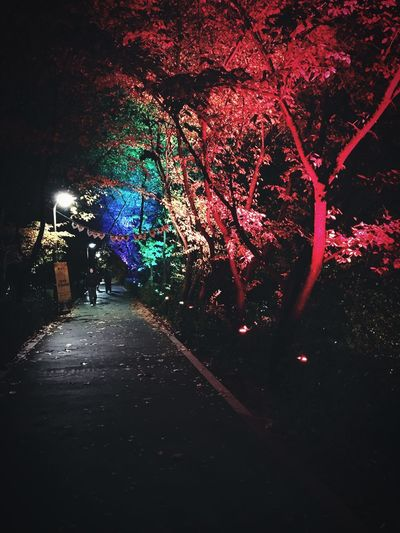 Tree Night Illuminated Real People The Way Forward Men Outdoors Growth Branch Road Nature One Person Full Length Beauty In Nature People