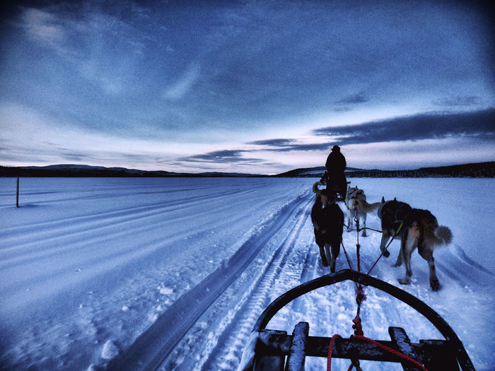 Northen Adventures Exploring Ice Kiruna Sledge Adventure Animal Animal Themes Blue Cloud - Sky Cold Cold Temperature Dog Domestic Animals Husky Mammal Nature Northern Sky Sledge Dog Snow Transportation Winter Inner Power