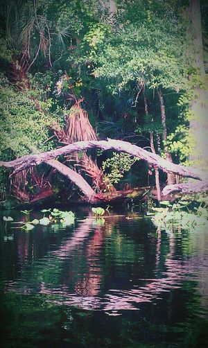 Built structure in lake against trees in forest
