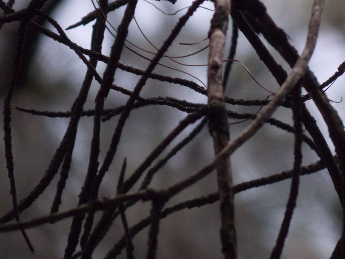 Destiny Bare Tree Beauty In Nature Border Branch Brown And Grey Close-up Cold Temperature Complexity Day Focus On Foreground Full Frame Nature No People Outdoors Pattern Plant Selective Focus Snow Tangled Tranquility Tree Twig Winter