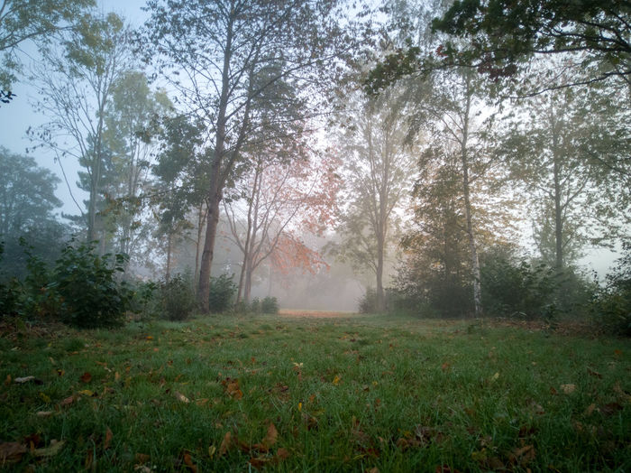 early morning in the woods Trees Trees And Sky Trees And Nature Nature Nature Photography Clouds Early Morning Morning Light Honor 10 United Kingdom Woods Tree Water Spraying Fog Field Grass Green Color Foggy Mist Weather Hazy