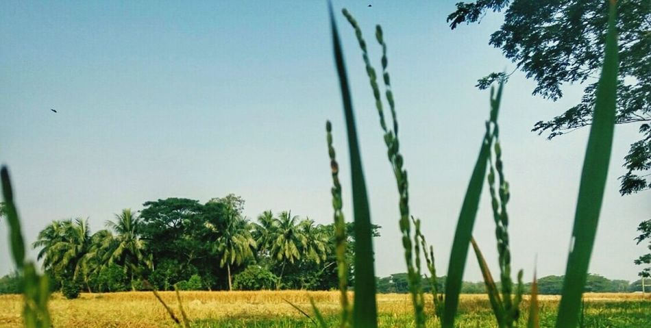 Natural Natural Beauty Nature Photography