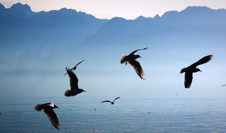Bird Animals In The Wild Flying Animal Wildlife Animal Themes Spread Wings Nature Mid-air No People Outdoors Flock Of Birds Beauty In Nature Mountain Water Taking Photos Landscape Landscape_Collection Blue Blue Sky Mountains