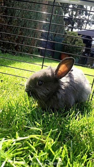 Bunny  Snuf Voerendaal