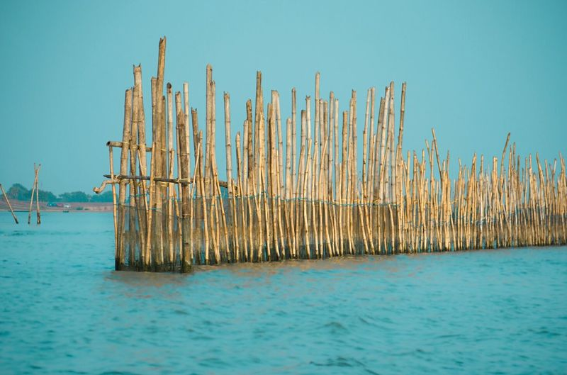 These bamboos