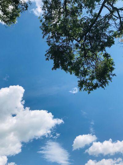 Looking up Sky