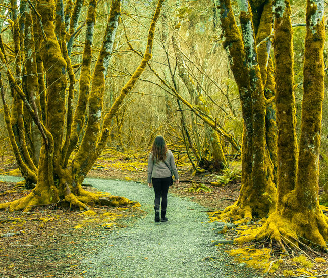 Hiking Majestic Nature Beauty In Nature Day Forest Full Length Growth Land Leisure Activity Lifestyles Nature One Person Outdoors Peaceful Plant Real People Rear View Standing Tree Tree Trunk Trunk Walking Women WoodLand The Traveler - 2018 EyeEm Awards