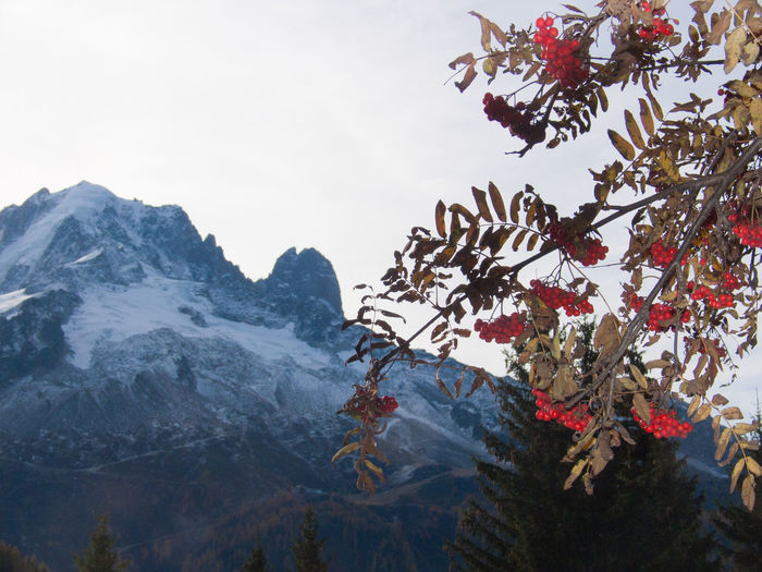 Cherries on tree by mountain against sky