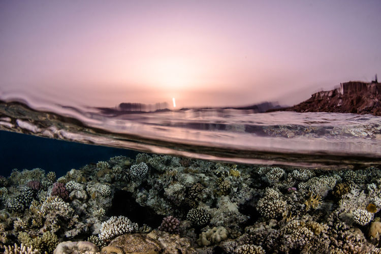 SCUBA Scuba Diving Sunset_collection Coral Reef Corals Marine Life Ocean Over Under Over Under Water Overunder Red Sea Scubadiving Sea Splitshot Sunset Underwater underwater photography Water Watersports