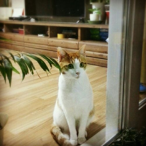 Cat Watching Cat