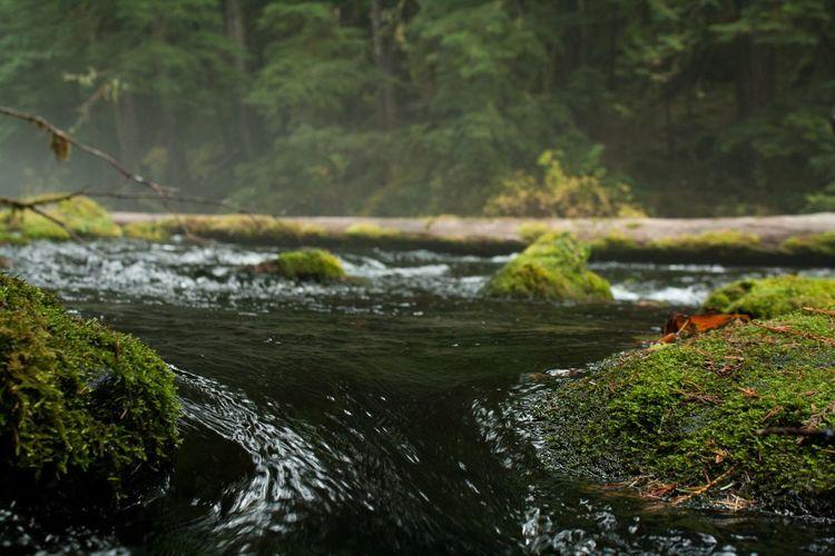 Water Oregon