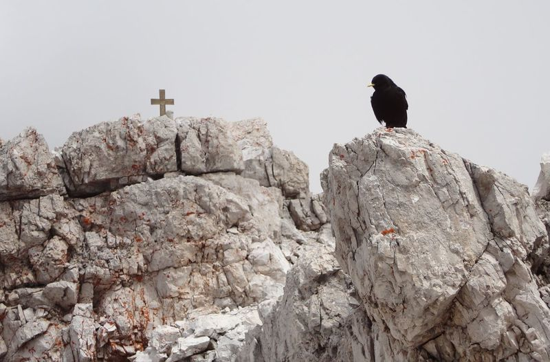 Low angle view of blackbird perching on rock formation against clear sky