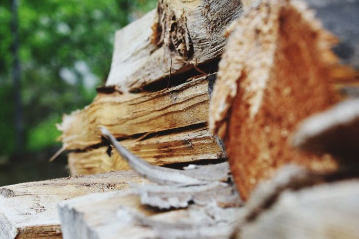 Wood Selective Focus Close-up Wood - Material Tree Firewood Wood No People Fuel And Power Generation Brown Outdoors Forest Deforestation Nature Stack Log Day Timber Lumber Industry Textured  Plant