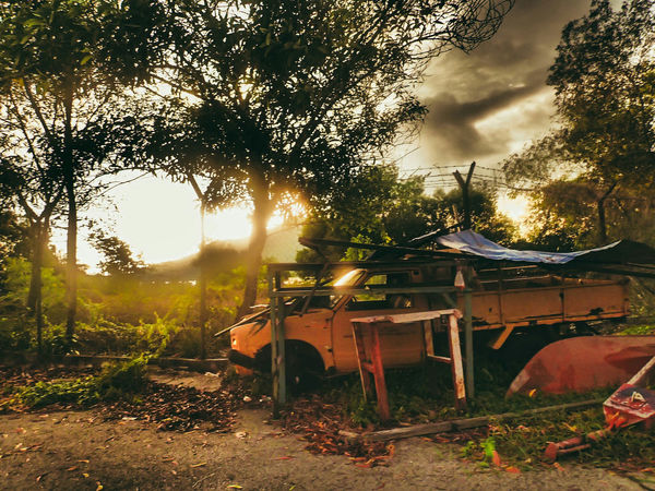 Tree Sunset Sunlight No People Nature Cloud - Sky Animal Themes Sky Beach One Animal Abandoned Cars Rusty Cars Beauty In Nature Day Shiny Abandoned Places Finding New Frontiers EyeEm Best Edits Adventure EyeEmBestPics EyeEm Gallery Performance New Talents Antique Car Factory