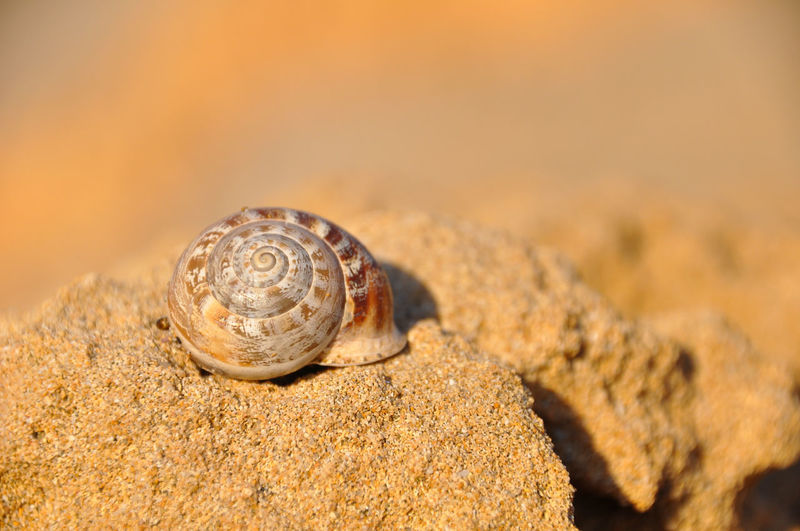 Close-up of shell on rock