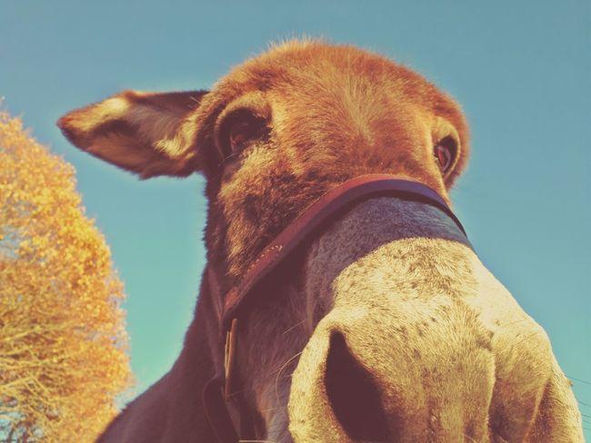 Josie Donkey Farm Creatures New England  Rhode Island